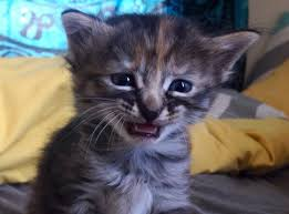 Sad Kitten Meme - really sad kitten meme generator