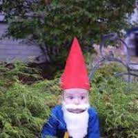 Gnome Toddler Halloween Costume Toddler Garden Gnome Costume 2t 3 Garden Xcyyxh