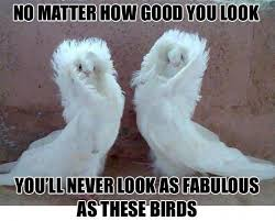 Funny Bird Memes - cute funny bird memes funny best of the funny meme