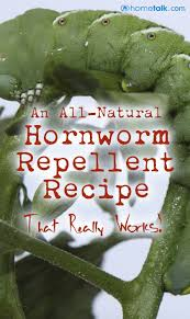 how to repel hornworms natural gardens and plants