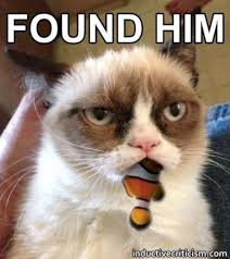Nemo Meme - grumpy cat finding nemo rofl pinterest finding nemo