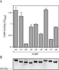 Ubiquitous Surface Proteins A1 and A2 Inhibitor C4b Binding Protein