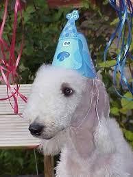 bedlington terrier guard dog bedlington terrier small dog breed breeds of small dogs best