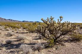 mojave desert native plants mojave desert blog