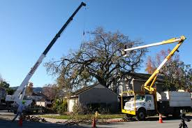 greene tree care