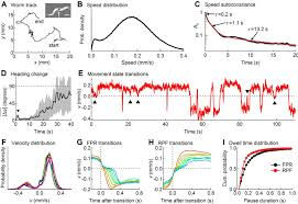 a stochastic neuronal model predicts random search behaviors at