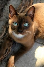 halloween background cat eyes 600x 600 87 best images about cats on pinterest tabby cats cats and