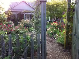 spring rose care top five u2013 the garden diary