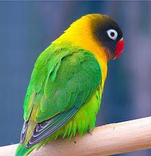 true love essays Suitcase Stories Love Birds