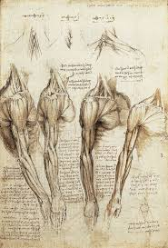 10 best leonardo da vinci images on pinterest drawings anatomy