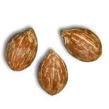 palm seeds palm tree seeds