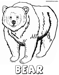 bear coloring pages coloring pages to download and print