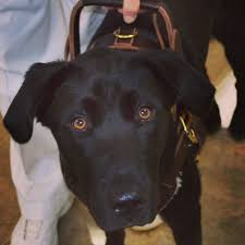 state with most dog owners 2016 that u0027s not a service dog but it is a working dog anything pawsable