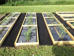 backyard garden weed weedreaper plant mendo weedless gardening