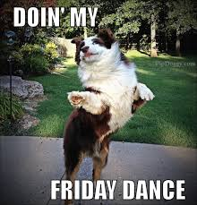 Border Collie Meme - dogs friday dance what breed is it