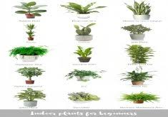 house plants no light ordinary indoor office plants no light low light loving