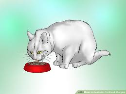 how to deal with cat food allergies 11 steps with pictures