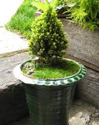 adjusting to the new winter weather in the miniature garden the