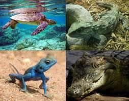 reptiles neogaf