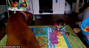 boxer dog youtube rumble viral u0027s youtube video shows baby and boxer dog kissing and