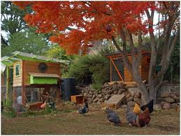 backyards superb backyard coops backyard chicken coop plans