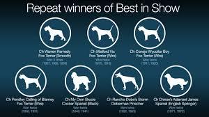 affenpinscher at westminster westminster dog show a brief history cnn