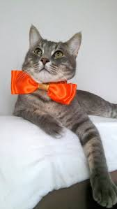 halloween bow ties orange fancy cat bow tie cat bow tie with satin collar and bell
