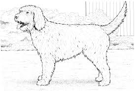 portuguese water dog portuguese water dog free coloring page