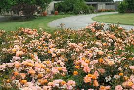 flower gardening for beginners gardensdecor com