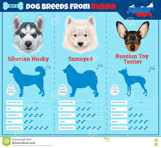 Types Of Dogs Dogs Breed Infographics Types Of Dog Breeds From Russia Stock