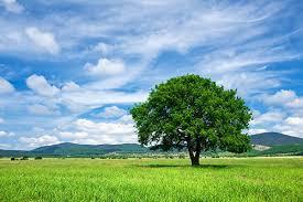taking beautiful tree photographs digital photo secrets