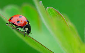 listen to the ladybug wild wisdom