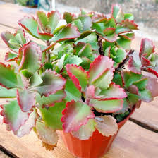 Easy Care Indoor Plants 10 Easy Care Indoor Plants Your Lazy Friend Can Deck Up The Room With