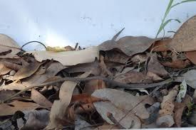 snakes u2013 my wild australia
