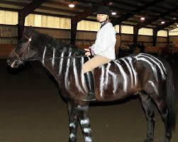 halloween horse winslow hosts halloween horse show warwick greenwood lake ny