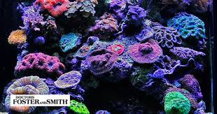 Live Rock Aquascaping Ideas Considering A Nano Aquarium Top 10 Tips For Small Aquarium Success