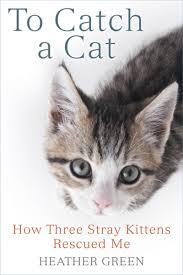 to catch a cat ebook by heather green 9780698197978 rakuten kobo