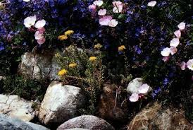 Rock Garden Plant Flowers And Plants For Rock Gardens How To Design A Rock Garden