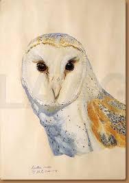 North American Barn Owl Agatha Vaeth North American Barn Owl