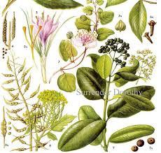 herb chart saffron bay cloves spice herb chart plant flowers food chart