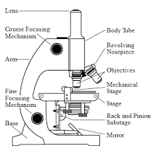 compound light microscope function discount microscope compound microscopes stereoscopes
