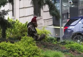manintree in downtown seattle now on ground the seattle times