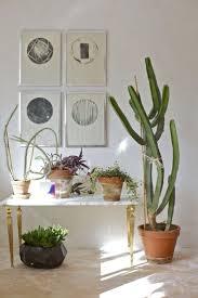 644 best succulentes cactus images on pinterest plants