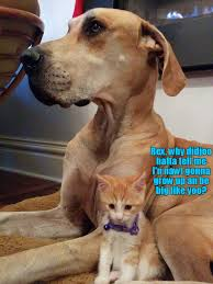 Disappointed Dog Meme - disappointed kitten told he isn t a dog i can has cheezburger