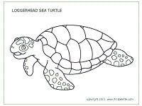 ornate box turtle coloring free printable coloring pages