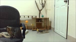 my logitech hd pro webcam c920 filmed in the cat room at night