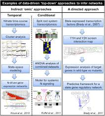 root systems biology integrative modeling across scales from