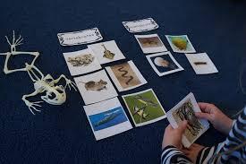 free printable worksheets vertebrates invertebrates montessori cards vertebrates invertebrates 5 vertebrate groups
