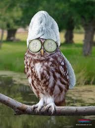 Funny Owl Meme - funny fashion askideas com