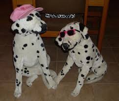 gafunkyfarmhouse this n that thursdays animal themed gafunkyfarmhouse on the homefront touch of pink dalmatian